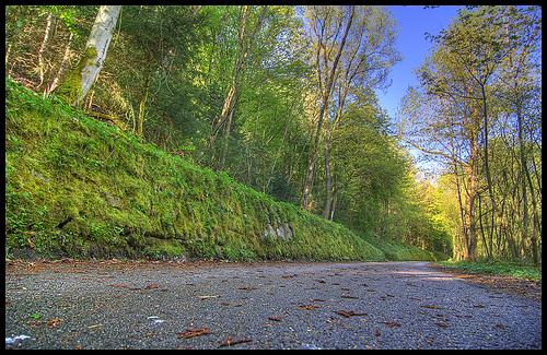 Danube cycle path by gessman