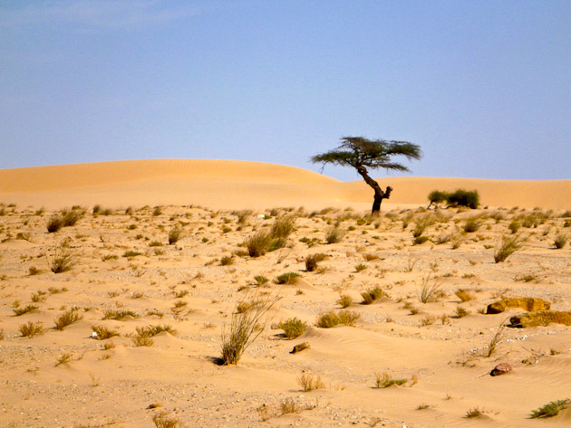 Top 5 Reasons to Go Bicycle Touring in Mauritania