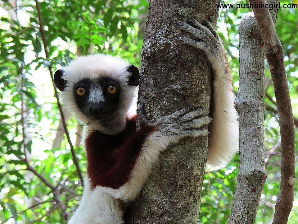 02 Madagascar Heike Pirngruber www.pushbikegirl.com
