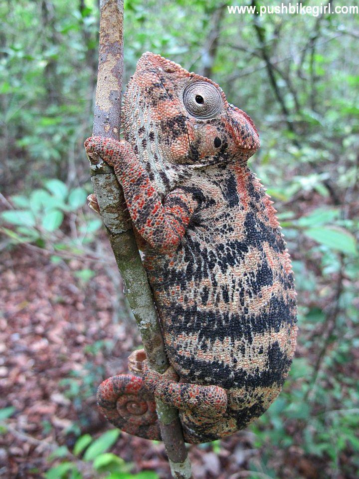 03 Madagascar Heike Pirngruber www.pushbikegirl.com