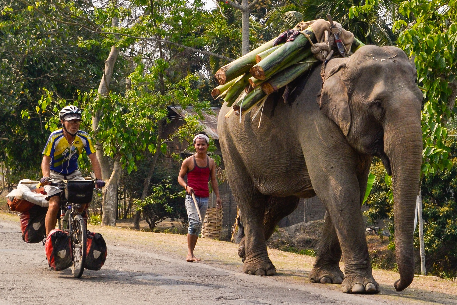 Incredible India: cycling the Northeast part 2