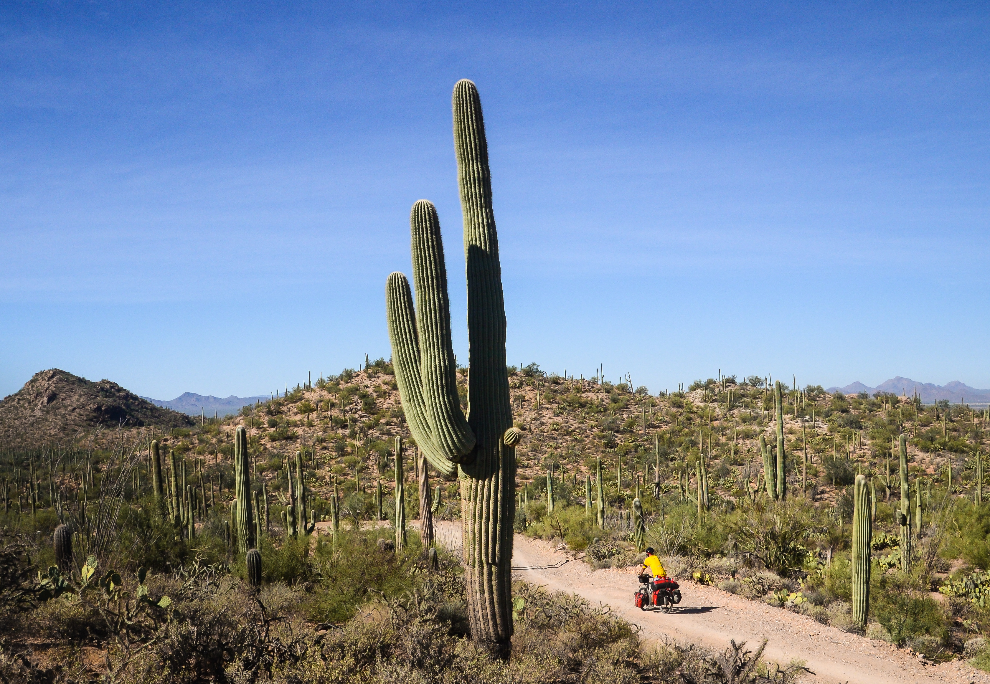 bicycle touring in Arizona Saguaro National Park