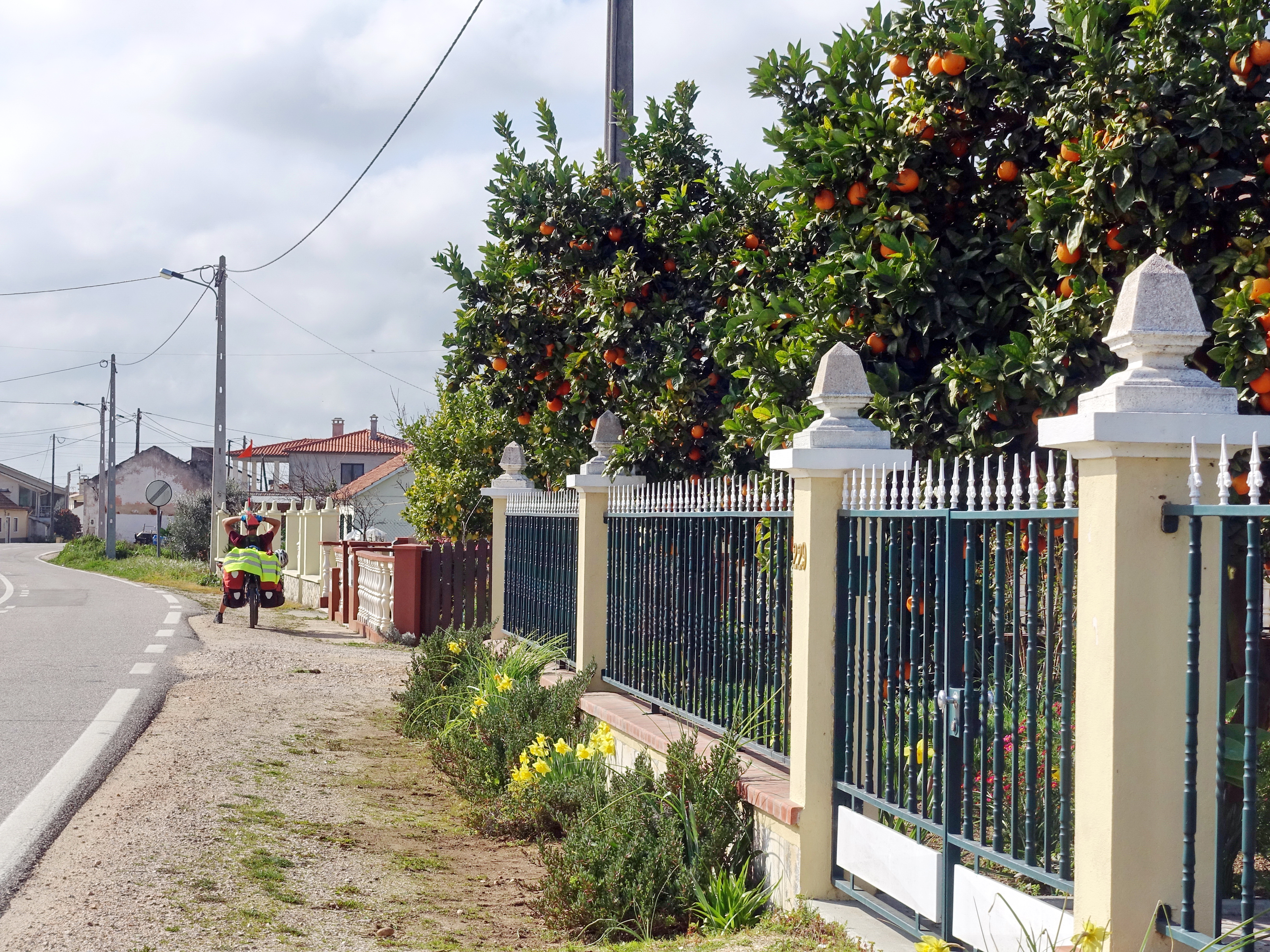Cycling in Portugal in February, during the orange season and in mild temperatures.