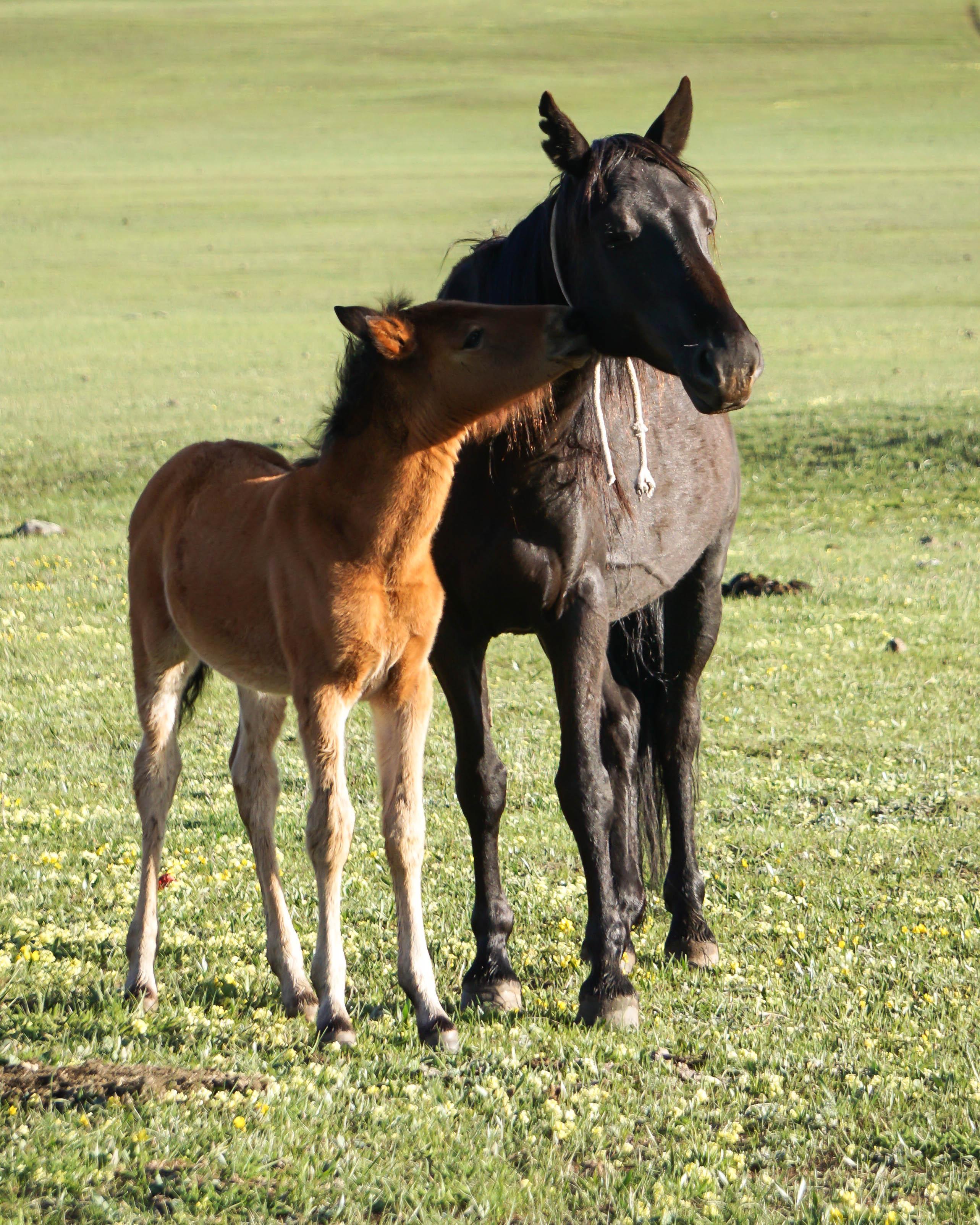 horse in Kyrgyzstan