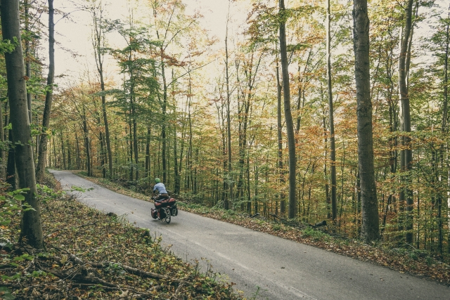 bike touring German forest