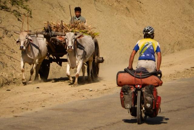rural myanamar with Oxen