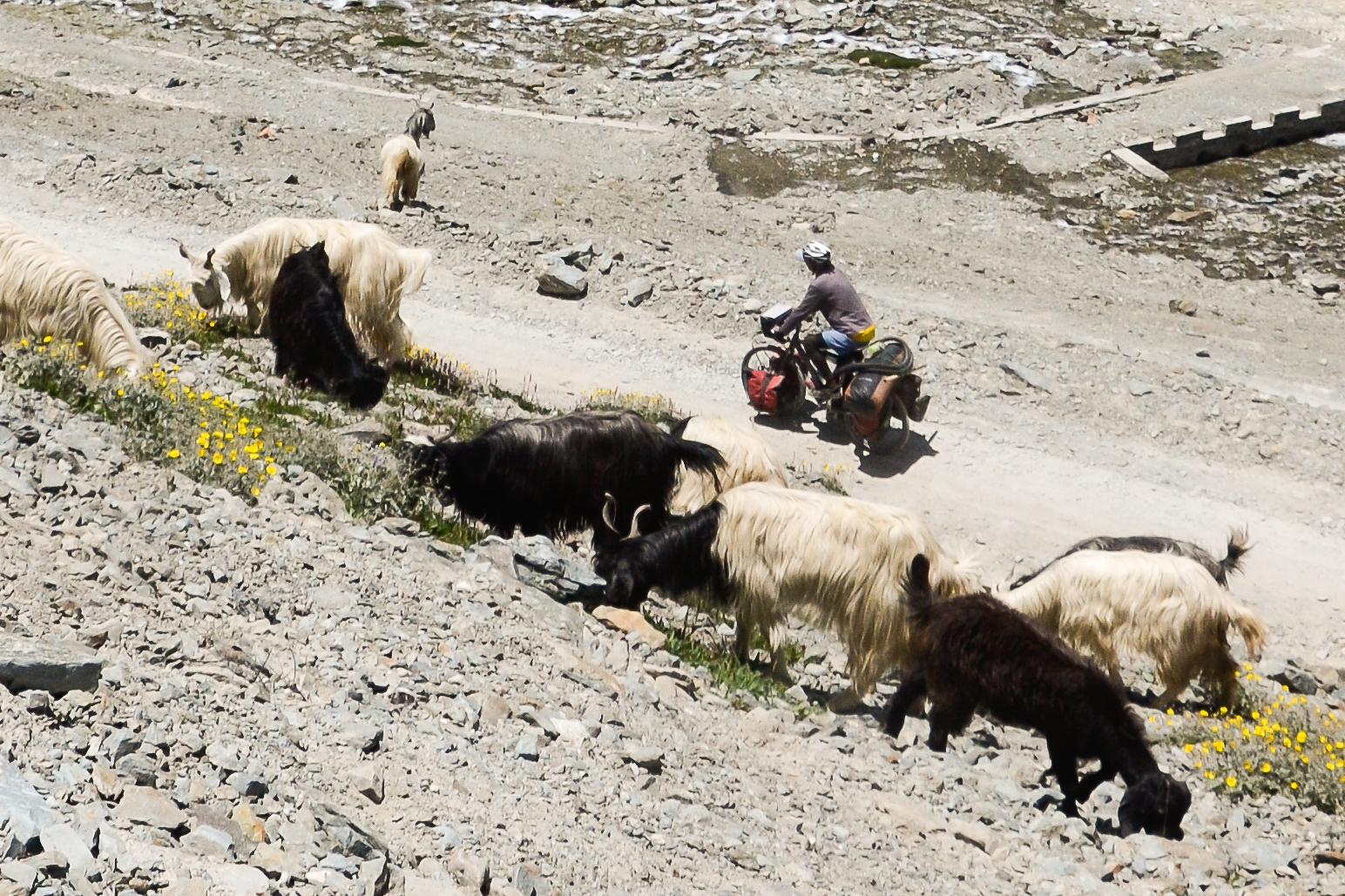 Cycling in Indian Himalayas, Spiti Valley