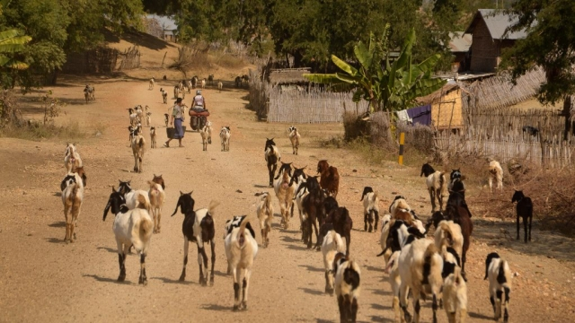 rural cycling in Myanmar