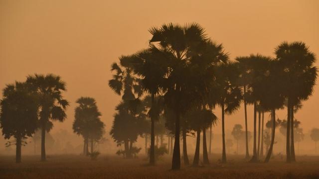 Misty Morning in Myanmar